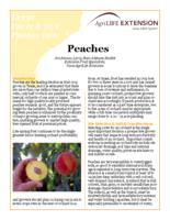 Peaches PDF