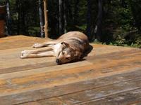 Mutt in the Sun: