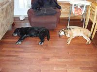 Dog Nap: