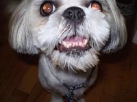 Pretty Molly: