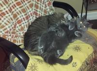 Cat Hug: