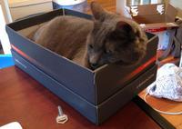 Precarious Boxnap: